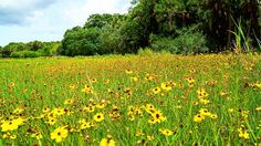 Near Deep Hole was this field of #wildflowers  How pretty!