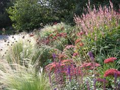 Persicaria, Alice Bowe English Landscape Garden Design - I like the combination of textures and manicured/wild shapes. Prairie Planting, Prairie Garden, Meadow Garden, Dream Garden, Gravel Garden, Garden Landscaping, Landscape Design, Garden Design, English Landscape Garden