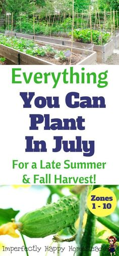 Everything You Can Plant In Your Garden In July for Zone 1, 2, 3 4, 5, 6, 7, 8, 9 & 10!