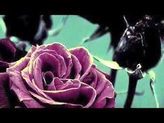 deep purple roses by marva Warrior Angel, Boris Vallejo, Dark Fantasy Art, Purple Roses, Deep Purple, Black Roses, Lilac, Wedding Flower Decorations, Wedding Flowers