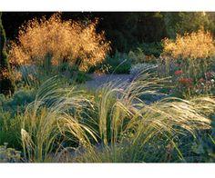 Beth Chatto Gardens - Colchester website - E Details