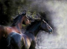Wild in the mist - horses, black, galloping, mist, wild, brown, free