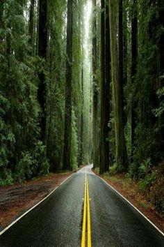 Hayalimdeki yol