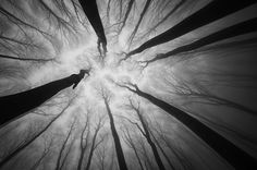 Amazing Pictures of One Point Perspective Photography 01  Sometimes you just have to look-up and shoot!!!