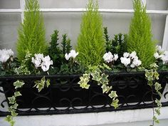 Winter window box - could do this with my little conifer that needs repotting an. - Winter window box – could do this with my little conifer that needs repotting anyway - Winter Planter, Fall Planters, Garden Planters, Terrace Garden, Evergreen Planters, Black Planters, Evergreen Garden, Fence Garden, Evergreen Trees