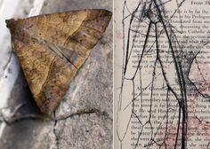 Anna Mavromatis: Artists' Books: autumn stories...