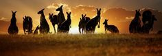 Hoe werken en reizen in Australië - http://www.backpack.nu/hoe-werken-en-reizen-in-australie_4427
