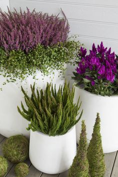 You Can Experience container gardening With One Of These Useful Tips Potted Plants Patio, Balcony Plants, Fall Planters, Balcony Garden, Outdoor Plants, Garden Pots, Outdoor Gardens, Modern Landscaping, Garden Landscaping