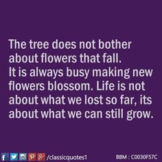 The tree does not bother about flowers that fall. It is always busy making new flowers blossom. Life is not about what we lost so far, its about what we can still grow.