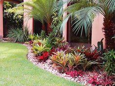 Canteiro tropical com bromelias | by Marcelo Walter