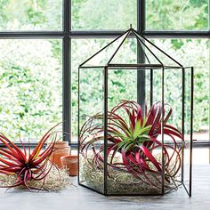 Experiment with Air Plants