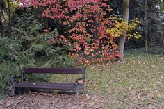 Természet - Vácrátót - Botanikus kert Outdoor Furniture, Outdoor Decor, Hungary, Home Decor, Decoration Home, Room Decor, Home Interior Design, Backyard Furniture, Lawn Furniture