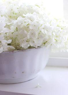 Hydrangeas. A bowl in every room please.