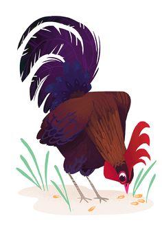 Kim Smith Chickens! on Behance
