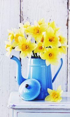 Daffodils in vintage French coffee pot, beautiful combination of yellow and blue.