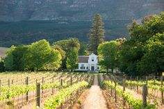 South Africa's diverse landscapes include the beautiful Winelands around Franschhoek, the country's gourmet capital. See CNTraveller.com's guide to where to stay in Franschhoek.