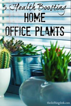 Trying to stay healthy while working from home? Check out this list of health boosting home office plants that help clean your home office's air.