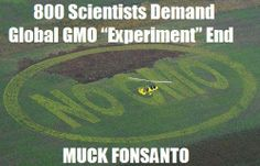 Scientist demand GMO end!