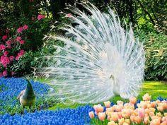 🔥 sup girl, you like 🔥 white bois? Beautiful Creatures, Animals Beautiful, Cute Animals, Unusual Animals, Wild Animals, Most Beautiful Birds, Pretty Birds, Beautiful Beautiful, Beautiful Scenery