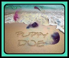 Kiya aka Puppy Doe.    RIP