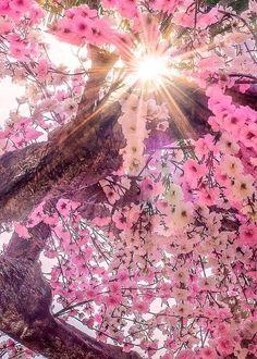 Fashion Art Pink Colour 51 Ideas For 2019