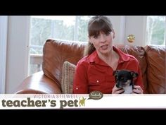 ▶ Discipline for Your Dog | Teacher's Pet With Victoria Stilwell - love her take on 'dominance training'.