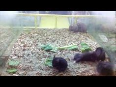 Hamster Harlem Shake...that's funny