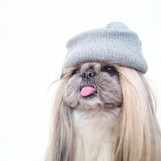 Puppy // In need of a tea detox? Get 10% off your order using our discount code 'Pinterest10' on www.skinnymetea.com.au