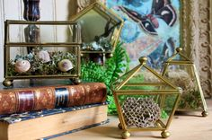 Wasp nest, snail shells and birds nest in glass boxes ~ for the love of curiosities / Sacred Spaces <3