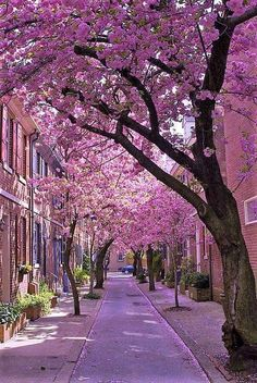 Pretty Images, Pretty Pictures, Beautiful Images, Beautiful Flowers, Beautiful Roads, Beautiful Landscapes, Beautiful World, Pink Blossom Tree, Cherry Blossom