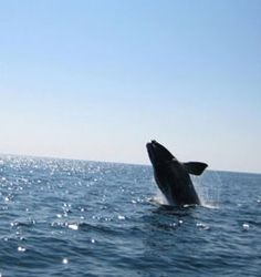Climate change: the effects on ocean animals