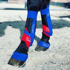 One of our most popular applications to help horses in both training and rehab situations. Dressage Horses, Horse Tack, Horse Therapy, Horse Exercises, Horse Riding Tips, Horse Care Tips, Kinesiology Taping, Horse Photography, Horse Love