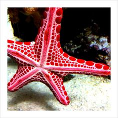 I like the scientific name better... echinodermata