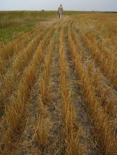 After the harvest. Canadian Prairies, Common Myths, Le Far West, Country Farm, Farm Life, Agriculture, Abundance, Harvest, Canada