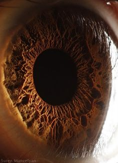 Microscopic images of the human eye