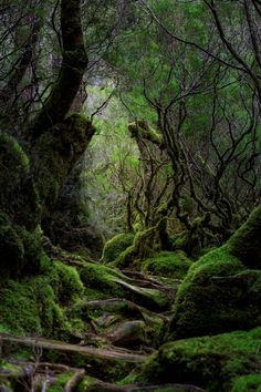 15 Simple Ideas for Forest and Woodland Photography Forest Photography, Landscape Photography, Scenic Photography, Aerial Photography, Night Photography, Landscape Photos, Photography Tips, Portrait Photography, Wedding Photography