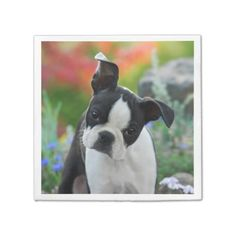 #funny - #Boston Terrier Dog Cute Puppy Animal Head Photo -_ Paper Napkin