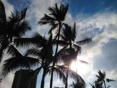 Seeking shade from the winter Waikiki sun. Honeymoon Vacations, Hawaii Honeymoon, Hawaii Vacation, Hawaii Travel, Vacation Destinations, Dream Vacations, Go Hawaii, Hawaiian Islands, Vacation Packages