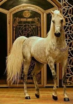 A stunning Arabian horse. Beautiful Arabian Horses, Majestic Horse, Most Beautiful Animals, Beautiful Creatures, Horse Photos, Horse Pictures, Horses And Dogs, Animals And Pets, All The Pretty Horses