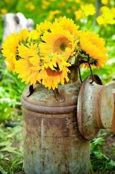 sunflowers, antique milk can