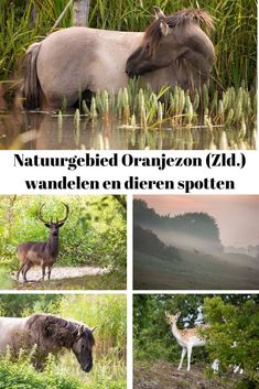 Annie Walker, Staycation, Netherlands, Camping, Backpacking, Things To Do, To Go, Places To Visit, Wildlife