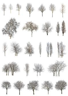 Cutout-trees png winter pack Cut out tree Coupes Architecture, Collage Architecture, Architecture Graphics, Architecture Visualization, Architecture Drawings, Architecture Portfolio, Landscape Architecture, Landscape Design, Rendering Architecture