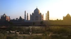 A shepherd walks near India& Mehtab Bagh at dusk in this National Geographic Your Shot Photo of the Day. Building Photography, Shot Photo, World Photo, Stunning Photography, Walking By, National Geographic Photos, Your Shot, Land Scape, Taj Mahal