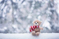 bear-christmas-ear-forrest-merry-Favim.com-248454.jpg (500×333)