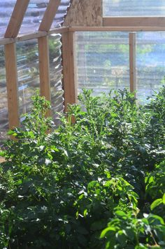 How to Build a Greenhouse (and what it actually costs) A view inside the Elliott Homestead greenhouse