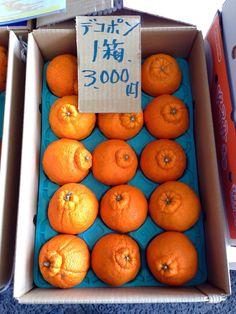 "Japanese mandarin orange ""Dekopon"""