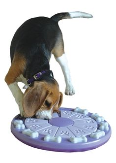Sliding Puzzle Feeder for Dog.  Could make something like this for primates.  Probably easier to make it straight than round.