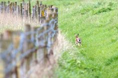 Fence with Hare! by Mark Johnson