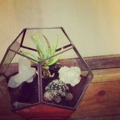 simple but cute geometric terrarium