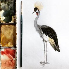 3,028 отметок «Нравится», 8 комментариев — Georgina Taylor (@__jorj__) в Instagram: «Grey Crowned Crane, watercolour #textiledesign #southafricananimals #ornithology #greycrownedcrane…»